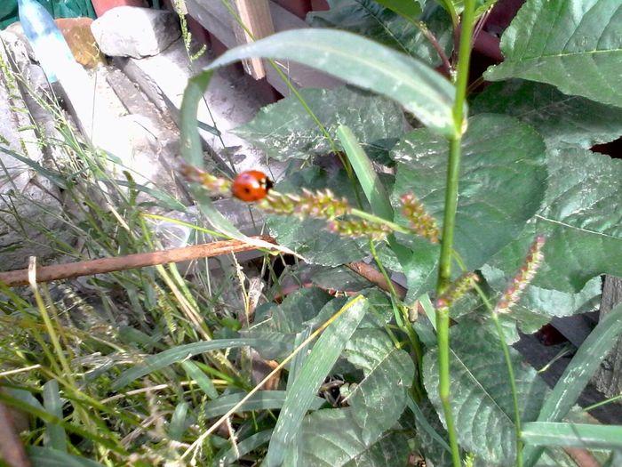 Unedited Ladybeetle Green Plants Ladybug Wolfzuachis Eyeem Market