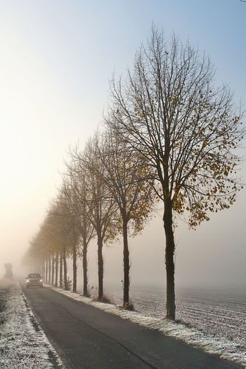 Autumn Baumreihe Beauty In Nature Car In Haze Fog Foggy Morning Frosty Frosty Morning. Haze Hazy Sunlight Hazy Sunshine Herbststimmung Line Of Trees Mist Misty Morning No People Outdoors Road Between Fileds