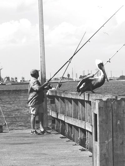 Port Aransas Texas Full Length Bird Railing Sky Animal Themes Real People Day Childhood Standing Outdoors One Person Animals In The Wild Nature
