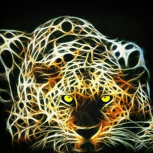 Eye4shadows Tiger Love