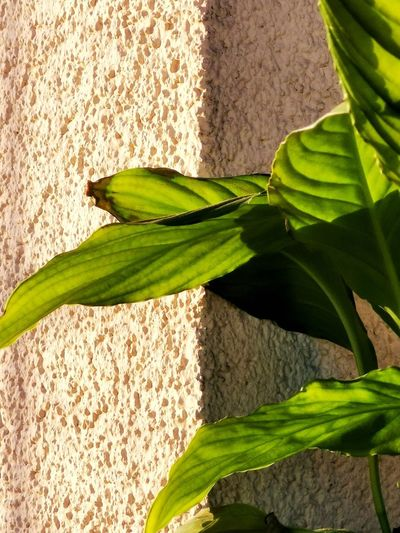 Close-up of fresh green plant against wall