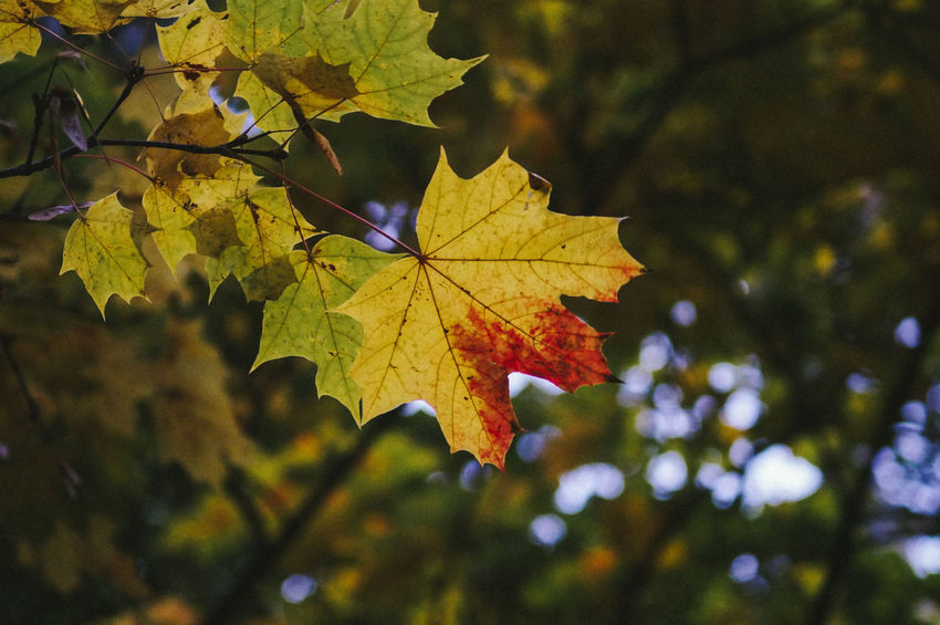 Autumn Beauty In Nature Day Foliage Leafage Nature No People Tree
