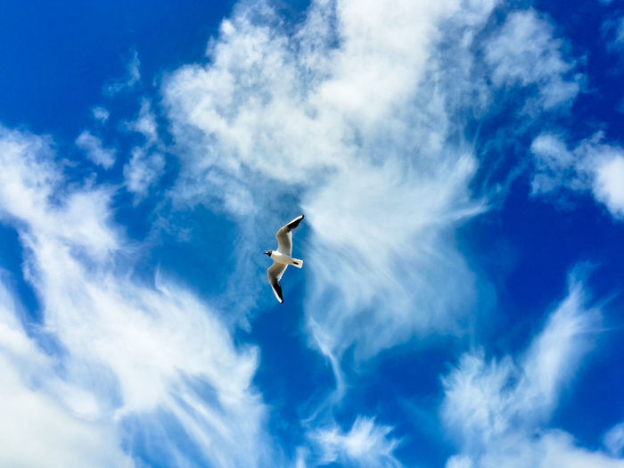 Low Angle View Of Black-Headed Gull Flying In Cloudy Sky