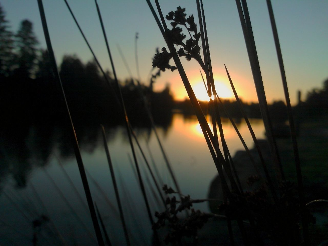 sunset, sky, nature, tree, no people, reflection, focus on foreground, water, outdoors, scenics, beauty in nature, tranquil scene, silhouette, growth, lake, tranquility, close-up, day