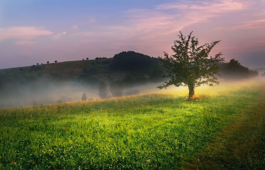 Lonely Tree Agriculture Beauty In Nature Day Field Grass Growth Landscape Nature No People Outdoors Rural Scene Scenics Sky Sunset Tranquil Scene Tranquility Tree
