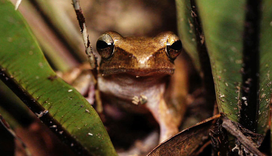 Close-up portrait of a frog
