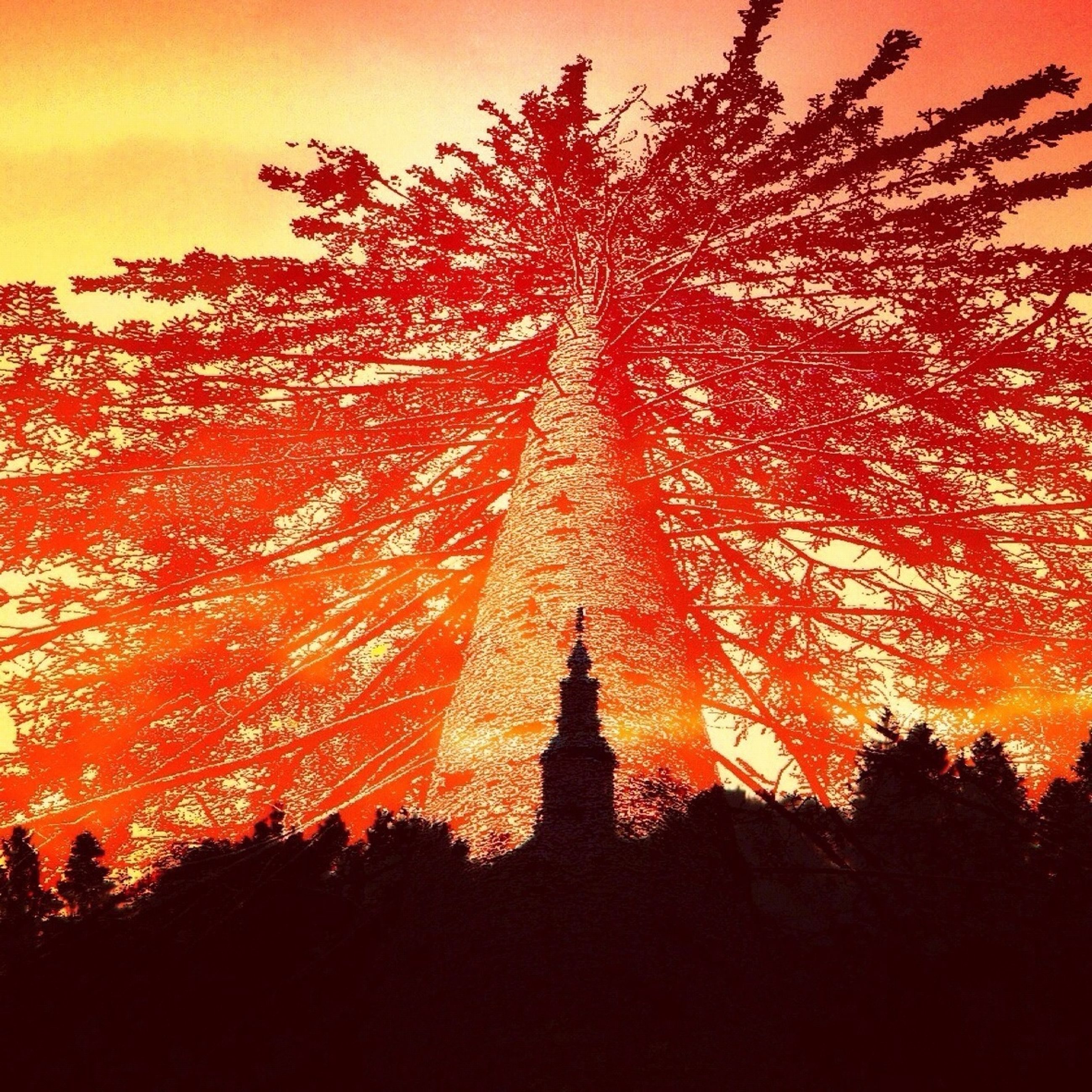 sunset, orange color, silhouette, tree, beauty in nature, tranquility, nature, low angle view, scenics, growth, sky, sun, tranquil scene, idyllic, outdoors, no people, sunlight, back lit, red, branch