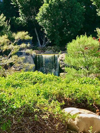 Beautiful day to see the Japanese friendship garden tTreenNo PeoplenNatureaAgricultureoOutdoorsdDaywWaterfall