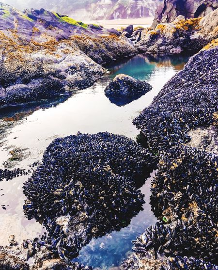 The Great Outdoors - 2016 EyeEm Awards Tide Pools High On Rock Island Morning Beach Combing Exploring Oregons Coast 2016 Photography BucketList Notes From The Underground Pacific Northwest Sealife Pacific NorthWest Clams Hidden Tide Pools Early PNW Mornings On The Coast Starfish And Clams Mother Natures Sealife Treasures My Peaceful Place 😇