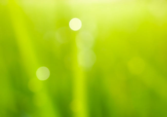 Abstract Abstract Backgrounds Beauty In Nature Blade Of Grass Bokeo Bright Brightly Lit Close-up Day Defocused Focus On Foreground Freshness Full Frame Green Color Growth Lens Flare Light - Natural Phenomenon Nature No People Outdoors Plant Selective Focus Soft Focus Sunlight Vibrant Color