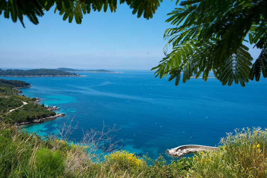 Croatia Croatian Coast Adriatic Adriatic Coast Adriatic Sea Beach Beauty In Nature Blue Day Foreground Grass Green Color Growth Horizon Over Water Idyllic Nature No People Outdoors Palm Tree Plant Scenics Sea Sky Tranquil Scene Tranquility Tree Water