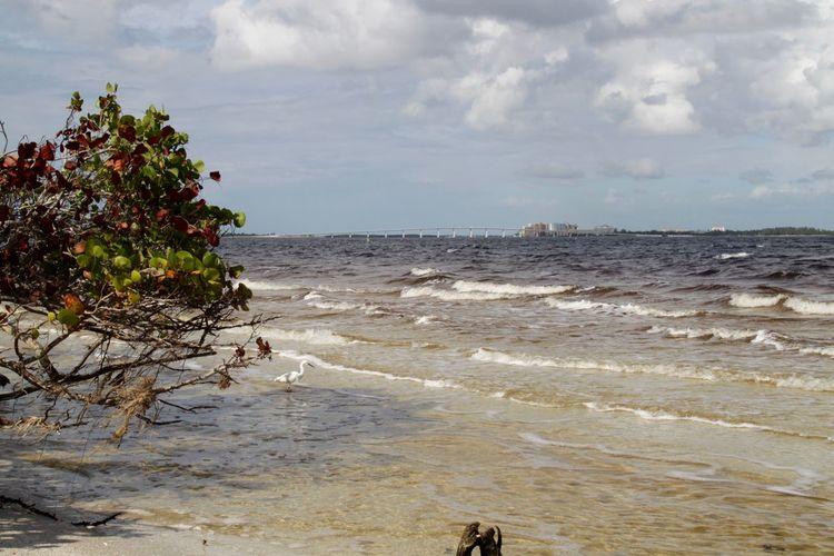 Captiva Oceanside Sanibel Causeway Sanibel Island USA Beach Beauty In Nature Bird Bridge - Man Made Structure Florida Florida Life Horizon Over Water Nature No People Ocean Outdoors Scenics Sea Tranquil Scene Tranquility Water