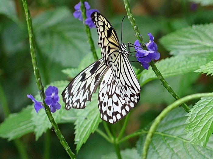 Open Wings Butterfly And Flowers Butterfly Nature Photography Tropical Paradise Beautiful Nature Naturelover