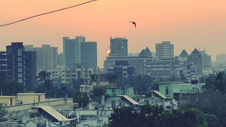Sunhiding Birds Sunbehindbuilding Skyscraper