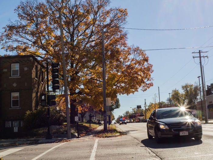 Day 98 of my 365 Day Challenge. License and Registration. I sincerely wasn't trying to catch someone running the red light. I wanted to get a shot of the tree on the left when the photography gods smiled on me. They say that sometimes serendipity steps in when trying to capture the perfect shot. This was unplanned and I was just lucky. :-) Shot with Olympus OM-D-M10, 17mm f/2.8 lens. Image detail 1/125 sec f/16 ISO 200 17mm. If you have the time it would really help me out if you visited fineartamerica.com/profiles/john-guest.html to see high resolution copies of this work and others that I have for sale. Autumn Leaves Car Caught Speeding City Street Lighting Equipment Mode Of Transport On The Move Policecar Running Red Light Speed Street Street Light Traffic Transportation Traveling