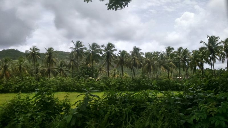 Coconut Coconut Trees Continuous Continuous Line of Trees Motion Photography Enjoying The View Taking Photos