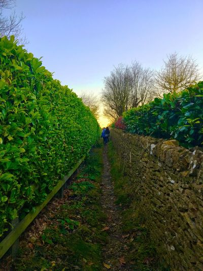 From here to eternity. Walking Real People Growth The Way Forward Day Rear View Green Color Outdoors Rural Scene IPhone EyeEmNewHere BYOPaper! Path Hedge Leaves Pebbles