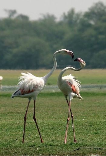Check This Out Taking Photos Eyemphotography DSLR Photography Canon1200DPhotography Flamingo Tholbirdsanctuary LoveBirds ❤