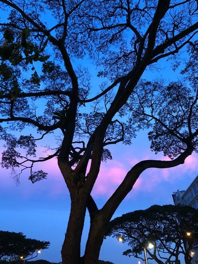 Dusk Tree Plant Sky Nature Branch Beauty In Nature Low Angle View Cloud - Sky