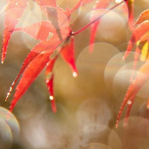 紅葉 From Kyoto~ Autumn Japan Japanphotography Amazing All_shots Canon Instagram Instamood Instagood Instafamous Instagramhub Gf_daily Gang_family Clubpirates