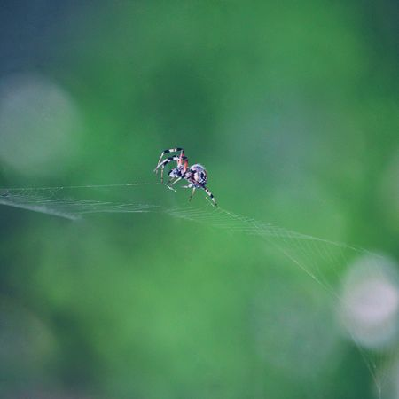 Insect Animals In The Wild Animal Themes One Animal Nature Animal Wildlife Day Outdoors Leaf No People Close-up Beauty In Nature