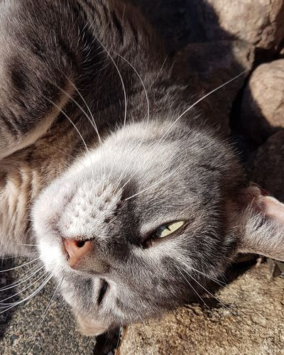 my old Girl Outside Sun Warm Day Autumn Grey Cat Sleepy At Home Yellow Eyes Home