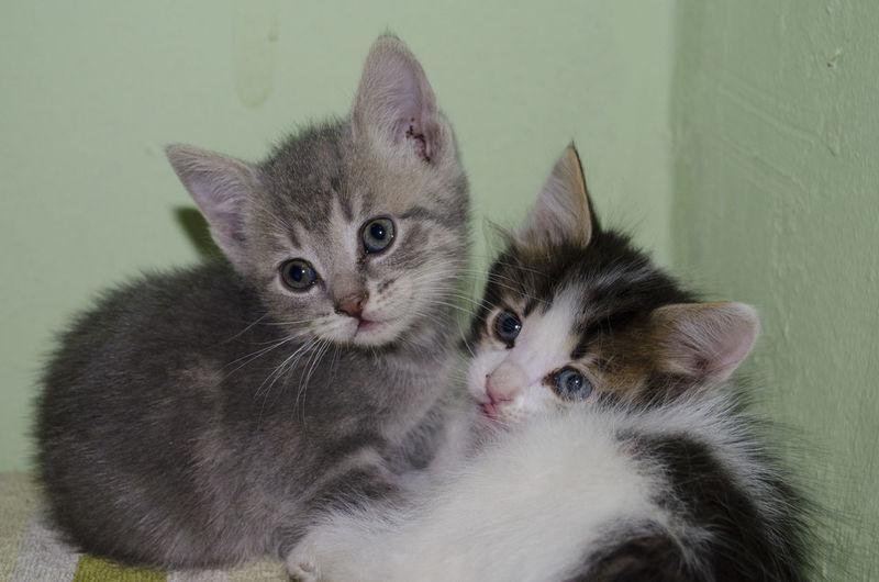 Cats Kitty Cat