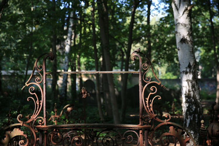 Metal gate against trees in forest