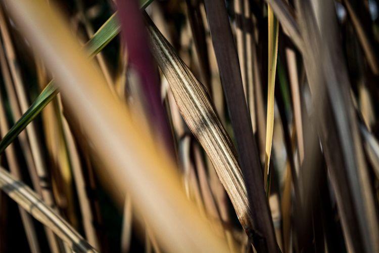 Bamboo, October