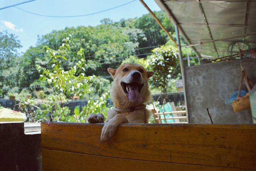 Pet Dog Animal Photography Animal_collection Dog Life Animal Happy Dog Lovely Lovely Dog Lovely Pet Lovely Animal