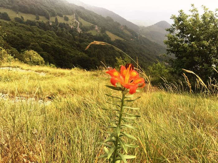 Nature Growth Beauty In Nature Plant No People Field Flower Green Color Day Tranquility Outdoors Grass Mountain Red Freshness Scenics Poppy Flower Head