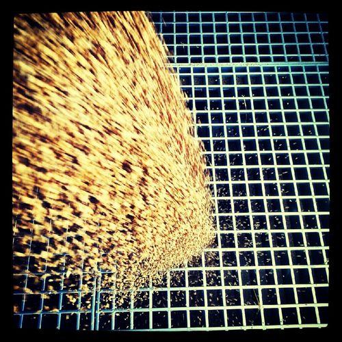 Working At Work Corn Unload Unloading Corn