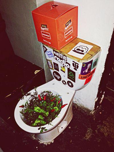 Wc Plants Joaquimcosta BAr 33
