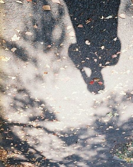 Fujifilm Olympus倶楽部 Olympuspeneed Myolympusstyle Film Filmphotography Filmcamera オリンパス倶楽部 オリンパスペンEED フィルム写真 フィルムに恋してる フィルム ふぃるむカメラ フィルム部 ハーフサイズカメラ 写真好きな人と繋がりたい ファインダー越しの私の世界 カメラ好きな人と繋がりたい お写んぽ Natura1600 ナチュラ1600 Halfsizecamera 富士フィルム オリンパスPENEED Shadow 影 落ち葉