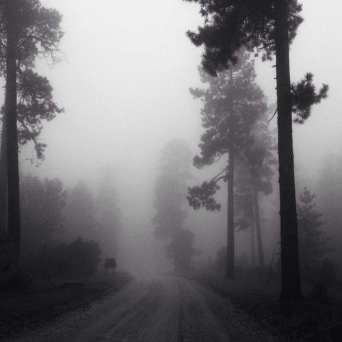 Fog Dirt Road Hugging A Tree