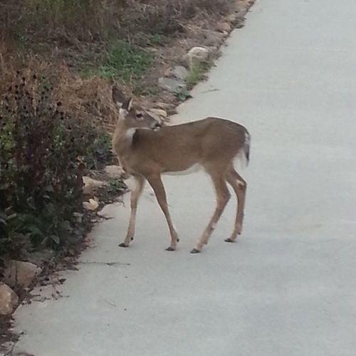 Look what I found on my driveway today.. xD Crazydeer Deer LOL Getoutofmyyard thankyou bye