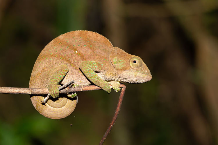 Close-up of lizard on branch