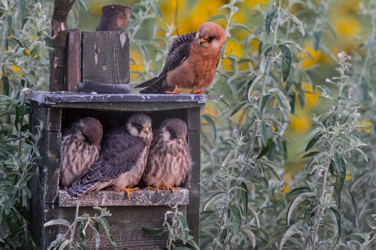 Birds perching on birdhouse