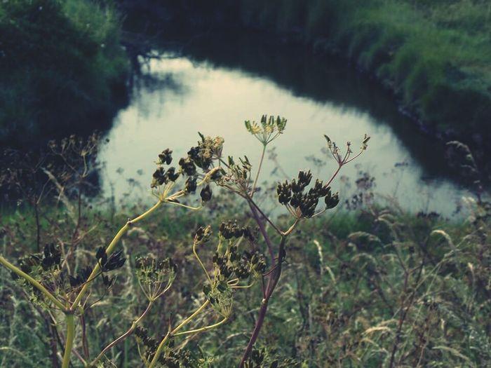 Taking Photos Nature Plants Stream