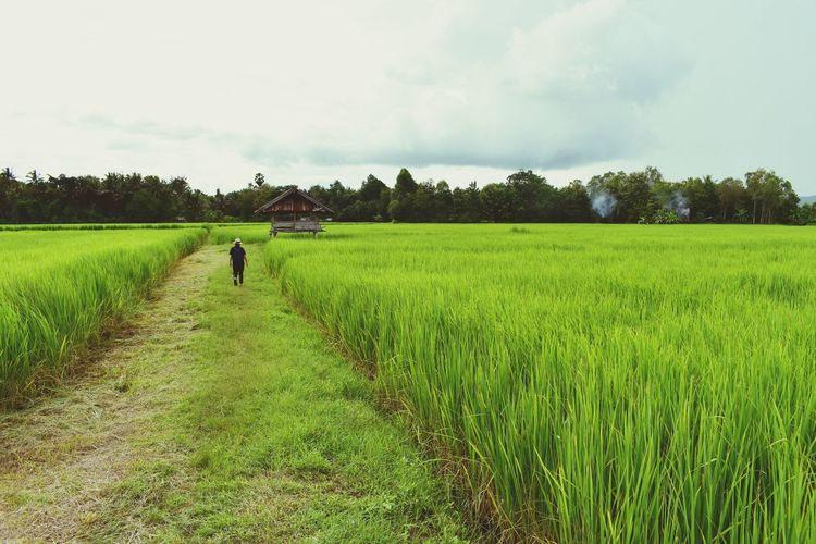 Rear View Of Woman Walking On Agricultural Field Against Sky