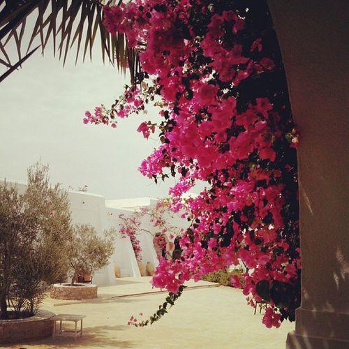 Musee Guellala Djerba  Tunisie tunisia