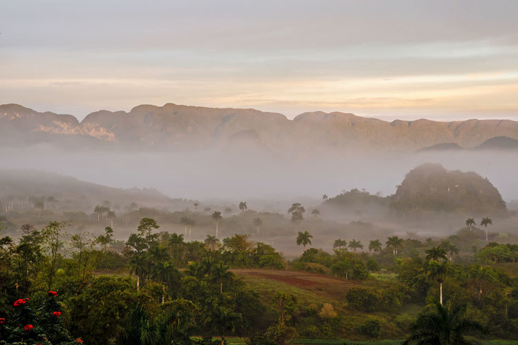 vinales valley in Cuba, where the tobacco to the famous cigars is grown Cuba Viñales Valley, Cuba Beauty In Nature Cloud - Sky Environment Fog Growth Hazy  Idyllic Landscape Mountain Mountain Range Nature No People Non-urban Scene Outdoors Plant Scenics - Nature Sky Sunset Tranquil Scene Tranquility Tree