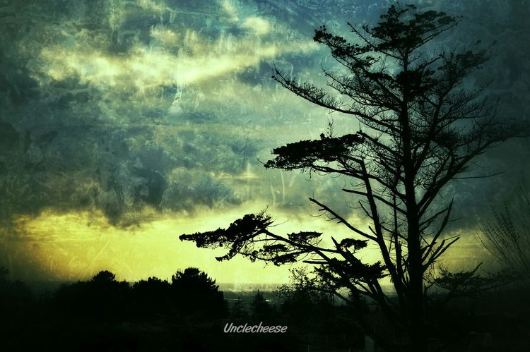 The Old Soul in the field Tree Streamzoofamily Grungy Myeditingobsession