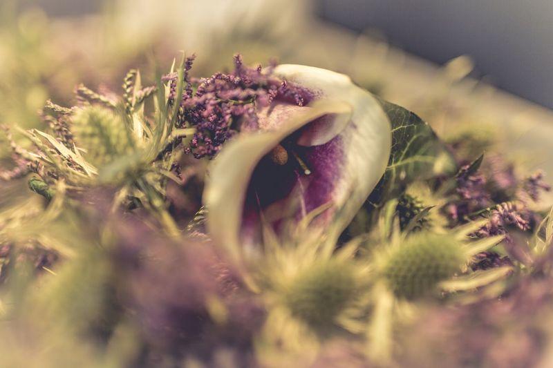 Flowers Wedding Scottish Scotland Thistle Thistle Flower Wild Flowers