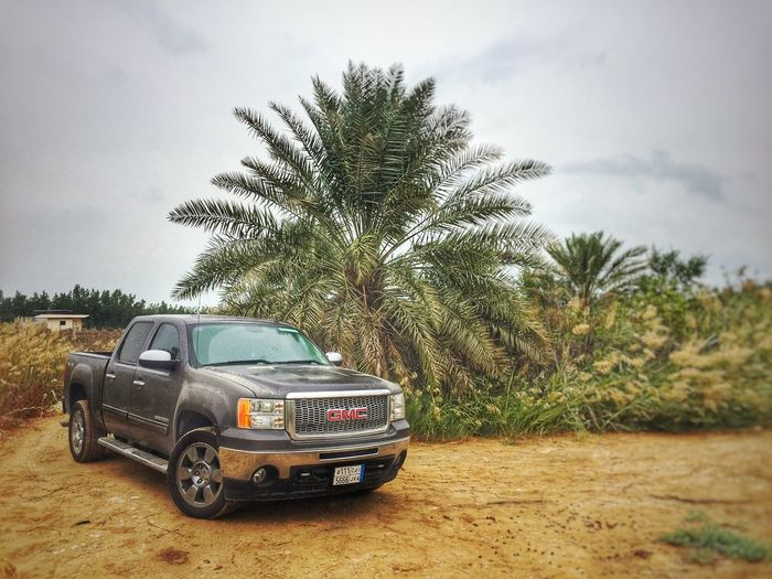 Car GMC Gmc Sierra Sky Palm Tree Day Tree Nature Outdoors 4x4 4x4 Trucks 4x4life First Eyeem Photo