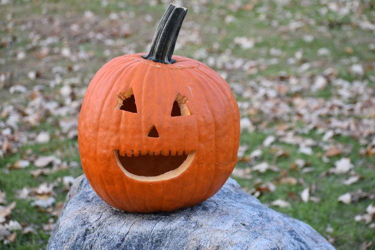 Close-up of pumpkin on halloween during autumn