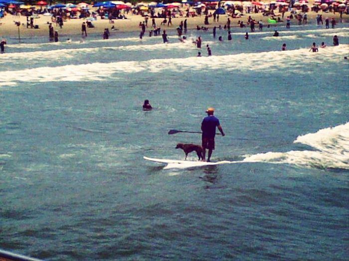 tava na praia qndo... Omg Dog Stand Up Reasons To Love Dogs