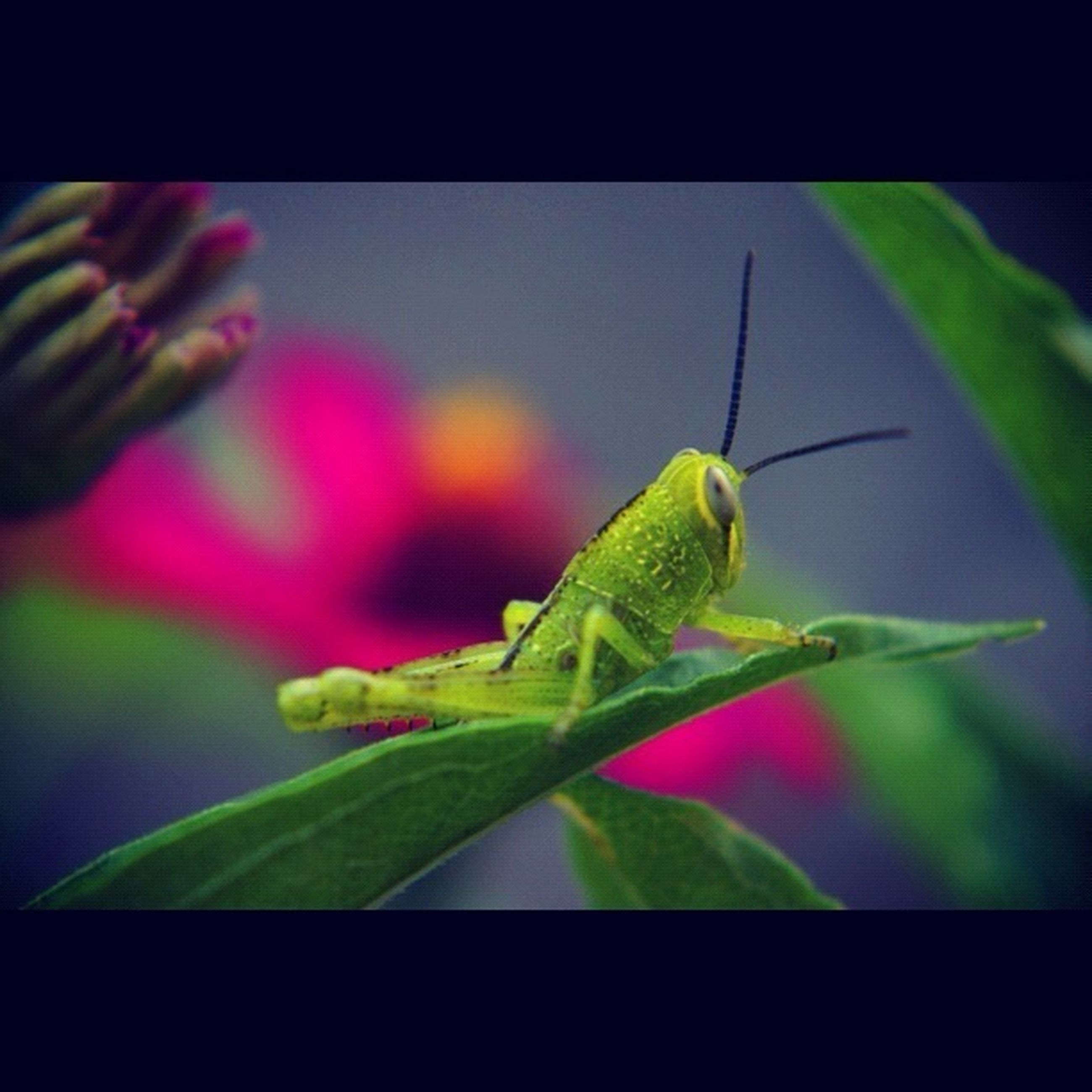 animal themes, one animal, animals in the wild, wildlife, insect, close-up, green color, leaf, focus on foreground, nature, perching, full length, zoology, plant, beauty in nature, selective focus, side view, animal antenna, green, no people
