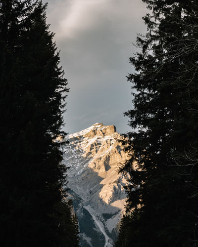 Scenic View Of Mountains Seen Through Trees At Banff
