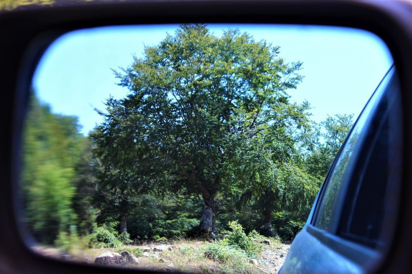 Car Tree Transportation Land Vehicle Mode Of Transport Side-view Mirror Vehicle Mirror Reflection Car Interior Day Window No People Close-up Outdoors Nature Sky Parco Dei Nebrodi Park Mountain Looking At Camera The Best Moment Of The Day Imagine Nature Sicily Beauty In Nature